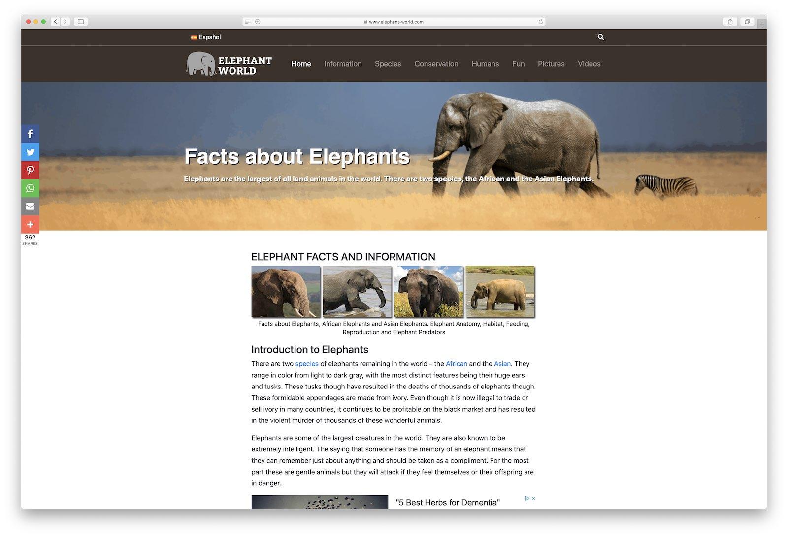 Elephant World Blog