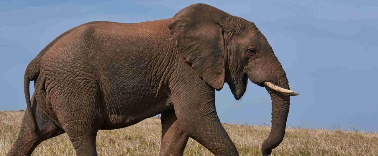 Meet SEOPress user PJ Sachdev and discover his Elephant World blog